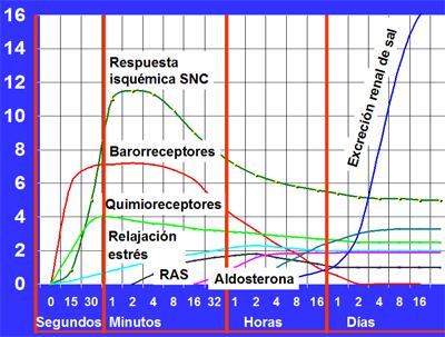 Baja renina alta aldosterona hipertensión en niños