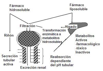Formula oms metabolismo basal