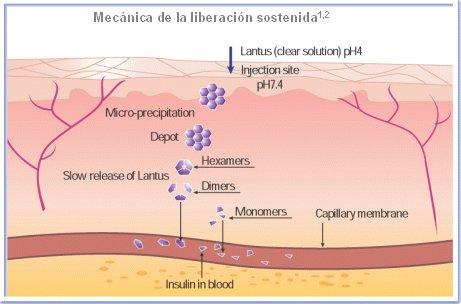 acción de la insulina en la diabetes