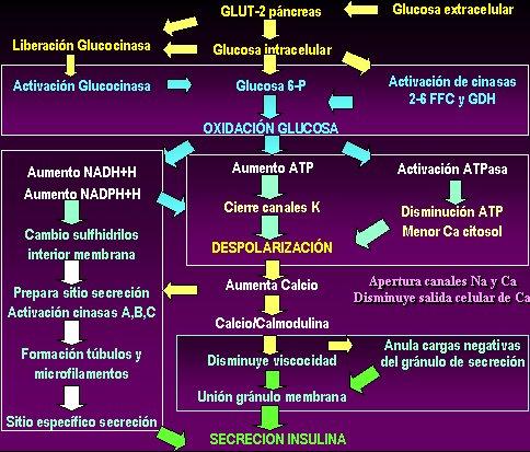 definición de secreción de insulina para diabetes tipo 2