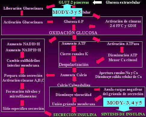 anticuerpos de diabetes tipo 1 negativos