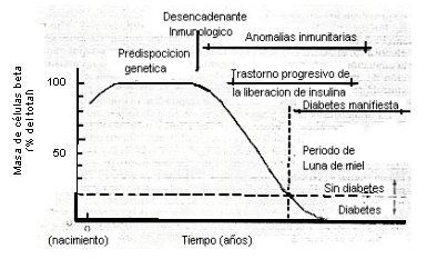 diabetes tipo 1 y predisposición genética