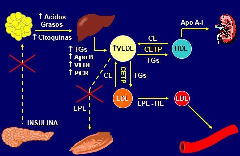 Metformina obesidad pdf - Hydrochlorothiazide generique