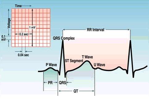 frecuencia cardiaca normal en recien nacidos pdf