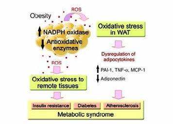 estrés oxidativo y diabetes archivo pdf