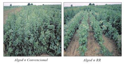 Qu es la biotecnolog a y qu son los alimentos for Que son cultivos asociados