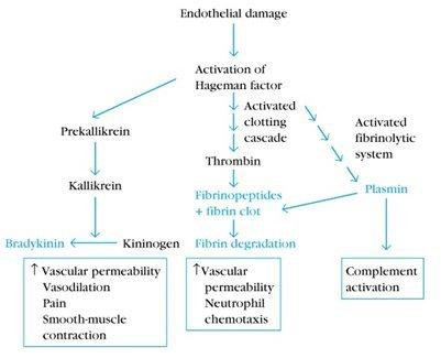 efectos secundarios del esteroides