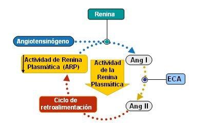 Sistema de retroalimentación en hipertensión