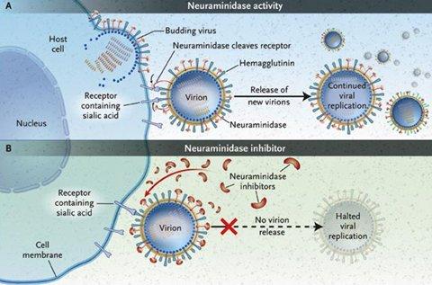 Influenza a h1n1 a o 2009 medwave - Mecanismo para reloj de pared ...