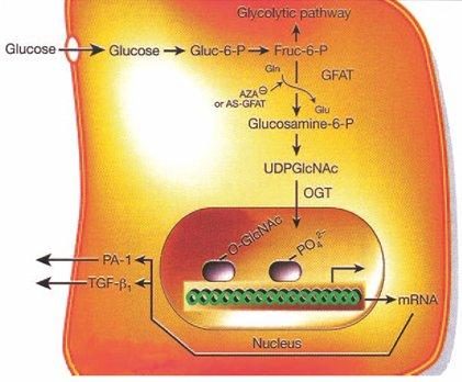 diabetes de glicosilación de autooxidación