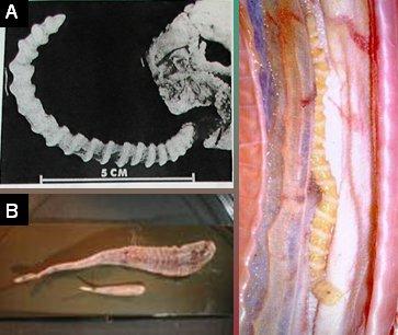 parasitos mas comunes en perros pdf