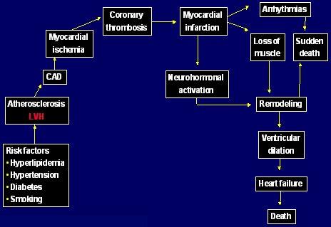 Daño de órganos de hipertensión arterial