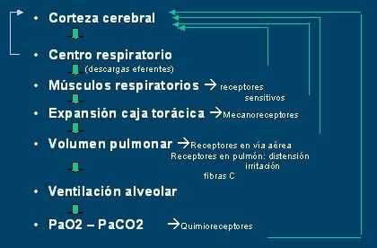 Estudio del paciente con disnea I: generalidades